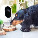 pet-camera